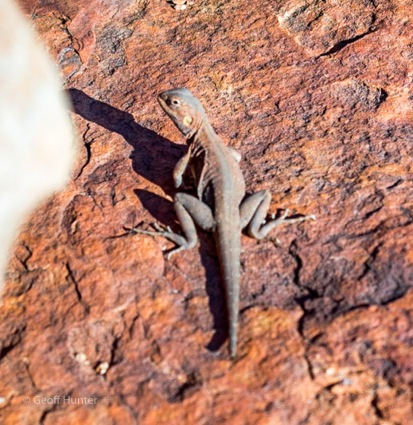 A bronzed Dragon at King Canyon on the Rim Walk