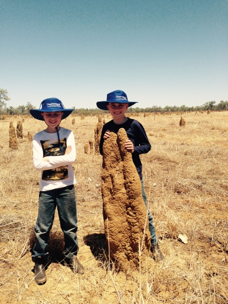 Termite Nests near Top Springs Northern Territory
