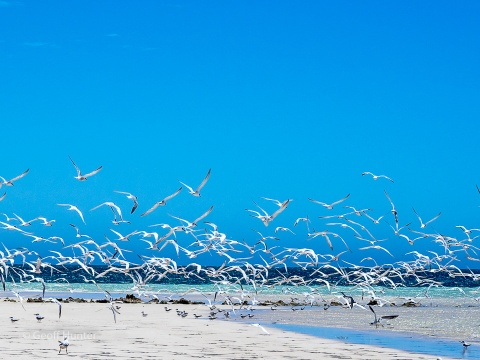 Terns at Coral Bay, Western Australia