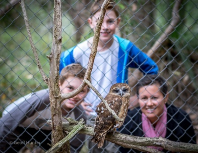 Boobook Owl with Fam in background