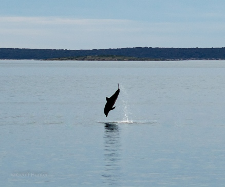 dolphin flippping out