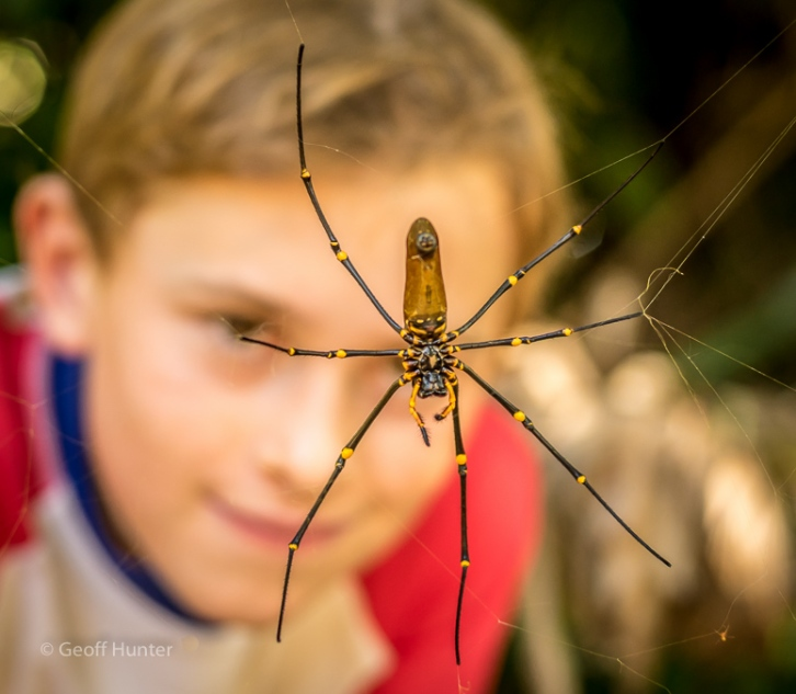 7-legged golden orb weaver