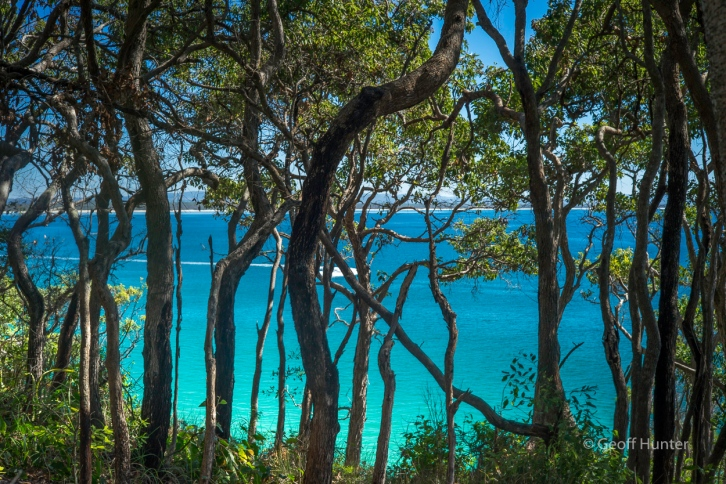 Bush along the Noosa Heads