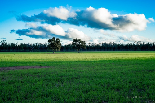 farmland meets forrest in the Pilliga.jpg