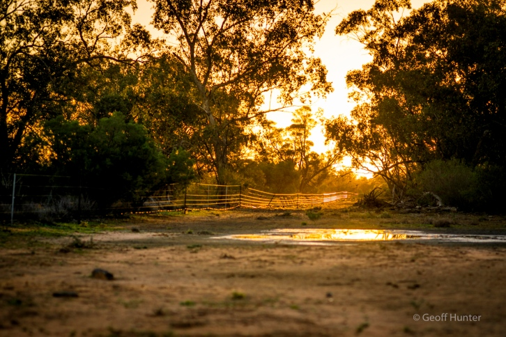 golden light at Bowra