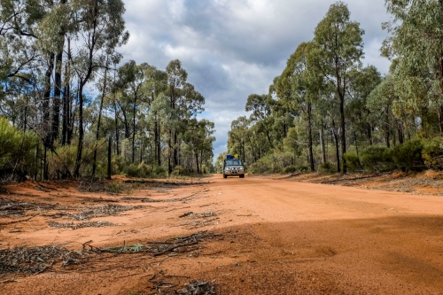 Pilliga forrest trails.jpg
