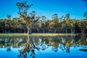 pilliga swamp land 2