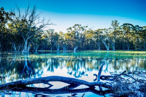 pilliga swamp with logs2.jpg